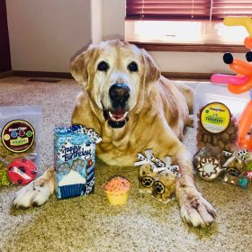 Maddoxs Mission Pet Financial Support For Life Saving Care 3